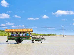 ANAインターコンチネンタル石垣リゾート:のどかな風景が広がる西表島