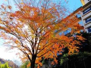花の心のおもてなし 辻のや花乃庄:今が見頃!庭園の木々の紅葉も色鮮やかです