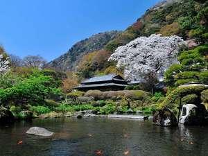 吉池旅館:日本庭園(春)※山桜満開風景