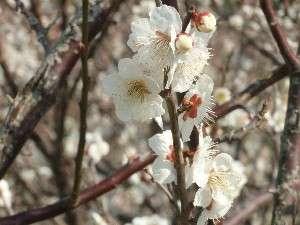 鋸南 佐久間ダムで撮影。春は亀山湖畔も花が綺麗です