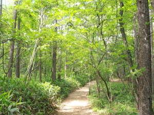 草津温泉 ホテルヴィレッジ:【当ホテルの魅力】ホテル周辺に広がる自然豊かなホテル周辺の森林浴コース。距離2.5キロ、1周約60分。