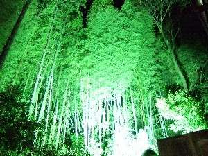 貴賓室『月光の間』のお食事処から見る竹薮のライトアップは貸切露天への渡り廊下からも見れます