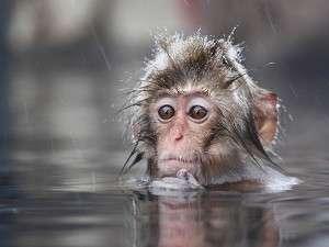 湯田中温泉 石庭露天風呂の宿 俵や:俺たちも温泉大好きだョ♪入浴中でちょっと恥ずかしいけど..外国のお客さんもたくさん来てるョ