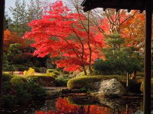鬼怒川グランドホテル 夢の季:秋色に染まる庭園は一番人気!夜にはライトアップも・・・!(画像例年:11月上旬~11月中旬)