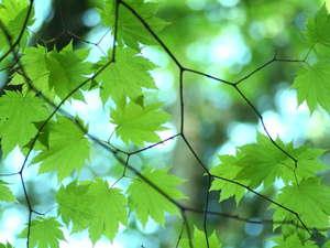 【夏】眩しいほどの新緑の季節は宿も静かで隠れおすすめシーズンです!