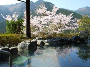 新祖谷温泉 ホテルかずら橋:桜満開の露天風呂
