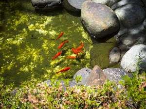 寛ぎの諏訪の湯宿 萃sui‐諏訪湖:庭園内の池