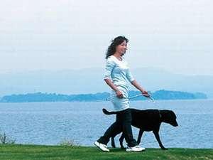 静かな湖畔の愛犬同伴宿 ペロはまなこ