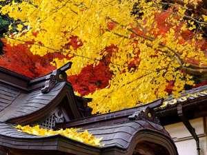 但東町にある安国寺は兵庫有数の紅葉スポット