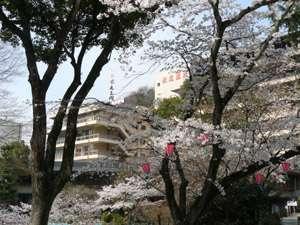 桜の時期 外観