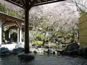 桜を望む露天風呂3月末から4月上旬が身頃です。