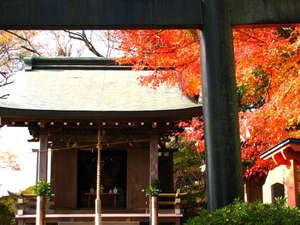 パノラマパークの紅葉(葛城神社)見ごろは11月下旬~