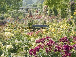 ウォーターマークホテル長崎ハウステンボス:2000品種120万本のバラ祭『グランドローズガーデン』