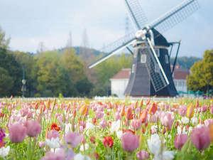 ウォーターマークホテル長崎ハウステンボス:『チューリップ祭』バスチオンの花畑
