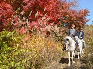 パディーフィールド:馬上で楽しむ紅葉狩り