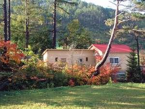 ふらのキャラバンハウス ちにた:秋 紅葉の中の ロッジ