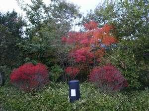 【周辺景色】紅葉のシーズンになると、緑と赤が交じりあい趣きある風景に。