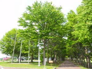 みちのく城址温泉・ホテルみどりの郷: 並木道。散策にどうぞ。