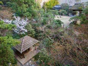 道後温泉 ふなや~創業三百九十余年~:庭に咲き始めた桜。【3月下旬頃】