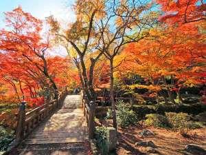 【熱海梅園】紅葉