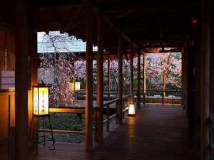 九十九里浜 白子温泉 青松庭 白砂:【館内渡り廊下から眺める白子桜】
