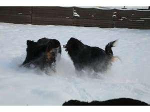 ペットと泊まれる宿 ゲストハウスベルン:雪のドッグラン6