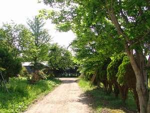 強首温泉 こわくびホテル :*自然豊かなお庭を散策♪気分も晴れやかに!