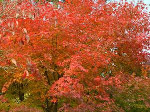 強首温泉 こわくびホテル :*秋には色とりどりの美しい紅葉がご覧いただけます…