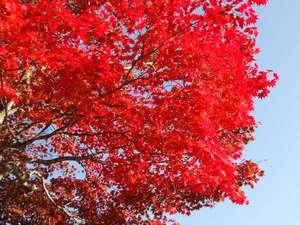 ドーミー倶楽部軽井沢:【紅葉の秋】軽井沢の紅葉は10月下旬~11月上旬が見頃になりそうです♪