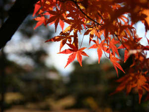 湯和み 別館 石和常磐ホテル:紅葉スポット多数!ぶどう狩りや秋の味覚に舌鼓!