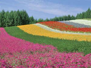 ホテルサンフラトン:【花の虹 ファーム富田】彩りの畑》
