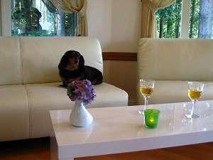 ペンション クローバーリーフ:大切なペットと一緒に食後のお時間を・・・飛騨の地酒もご用意しています。