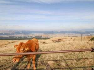 阿蘇内牧温泉 大観荘:*【周辺】阿蘇山から外輪山の景色