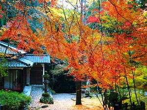 相生羅漢の里     紅葉風景