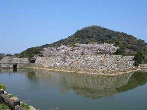 【萩城跡・指月公園桜】600本ものソメイヨシノと萩にしかない「ミドリヨシノ」が人気です