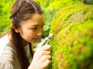 【苔さんぽ】奥入瀬渓流の景観美をつくっている苔。神秘的な苔のミクロ世界と出逢うツアー