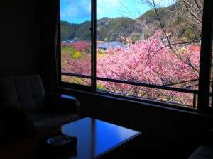 河内屋  源泉かけ流し100%の湯宿:新館2階客室からの眺めは窓が広くてよく見えます。河津桜の濃いピンクが春の訪れを感じさせてくれます。