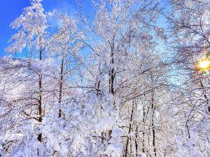 牧ノ戸温泉 -九重観光ホテル- 自家源泉のある山麓の宿:九重の地に、冬がやってきました。雪見露天が楽しみですが、お気をつけてお越しくださいませ