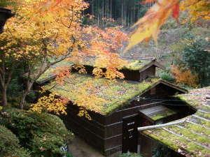 小杉庵:紅葉と貸切風呂