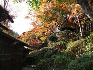 小杉庵:紅葉が美しいお庭