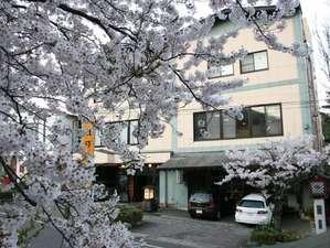 弥彦温泉 割烹の宿 櫻家の写真