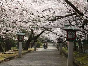 弥彦温泉 割烹の宿 櫻家:春の公園