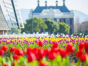 ホテルアムステルダム 【ハウステンボス ザ・スリーホテルズ】:【2/9~4/17】チューリップ祭