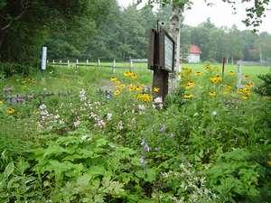 花とハーブの宿 ブリットハウス