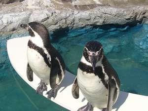 絶景の宿 犬吠埼ホテル:かわいいフンボルトペンギンがお出迎え♪