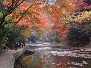 養老温泉 秘湯の宿 滝見苑:紅葉を望む「粟又の滝」遊歩道は当館より徒歩5分。