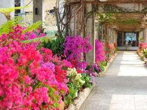 JAL プライベートリゾート オクマ:年中咲く色鮮やかな花たちがフロント前でお出迎え