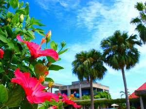 JAL プライベートリゾート オクマ:年中咲くハイビスカスは南国気分を盛り上げてくれます。