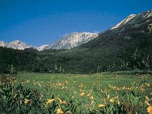 高山植物が咲き乱れる栂池自然園は日本有数の高層湿原