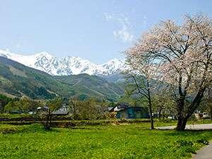 桜の花も綺麗な春の北アルプス白馬
